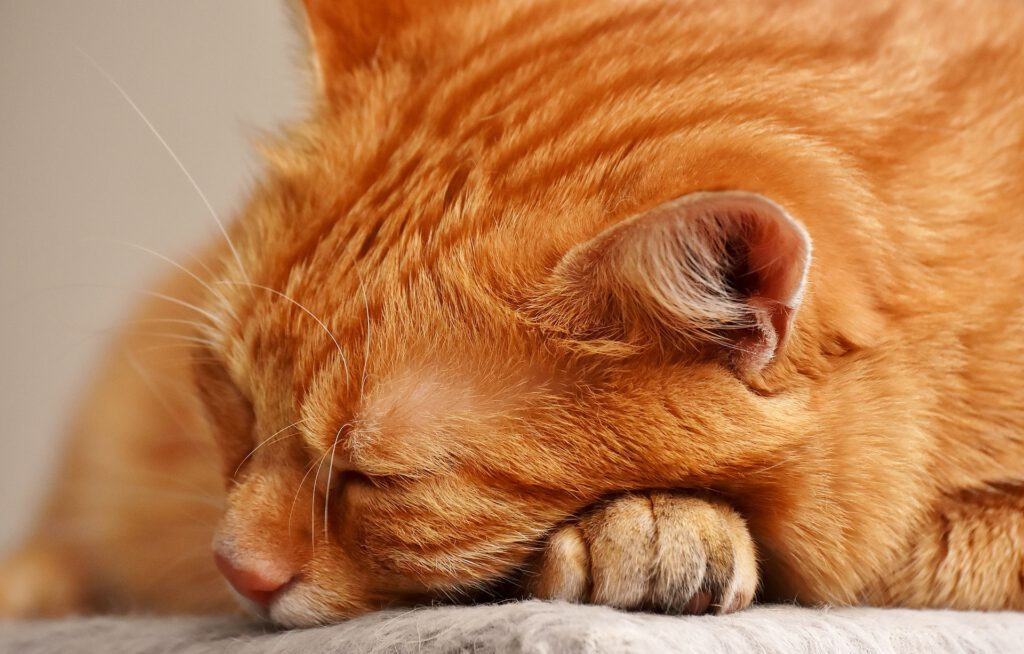 Pan kotek był chory …. Na anginę, tylko którą?!